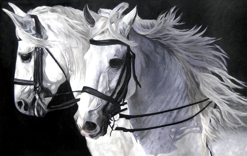 Parading White Stallions