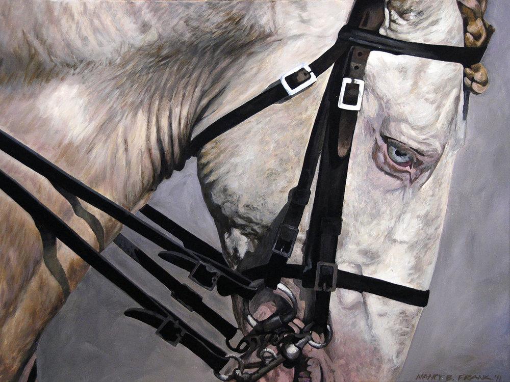 Cremello Lusitano Stallion