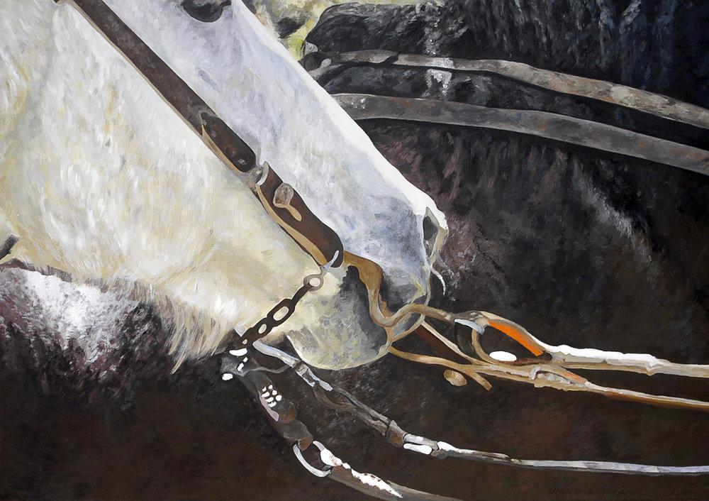Caballos y Gauchos VII