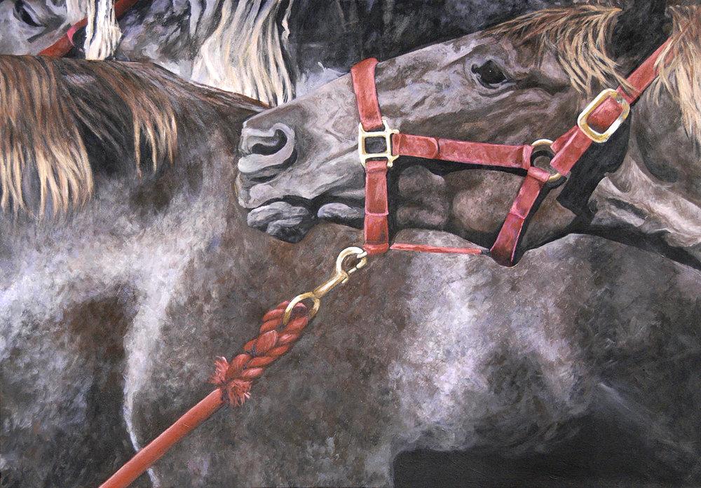 Drag II/Rocky Mountain Horse