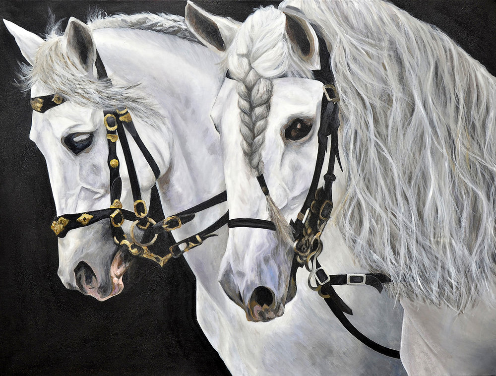 Golega Feria White Lusitano Stallions; Matched Pair