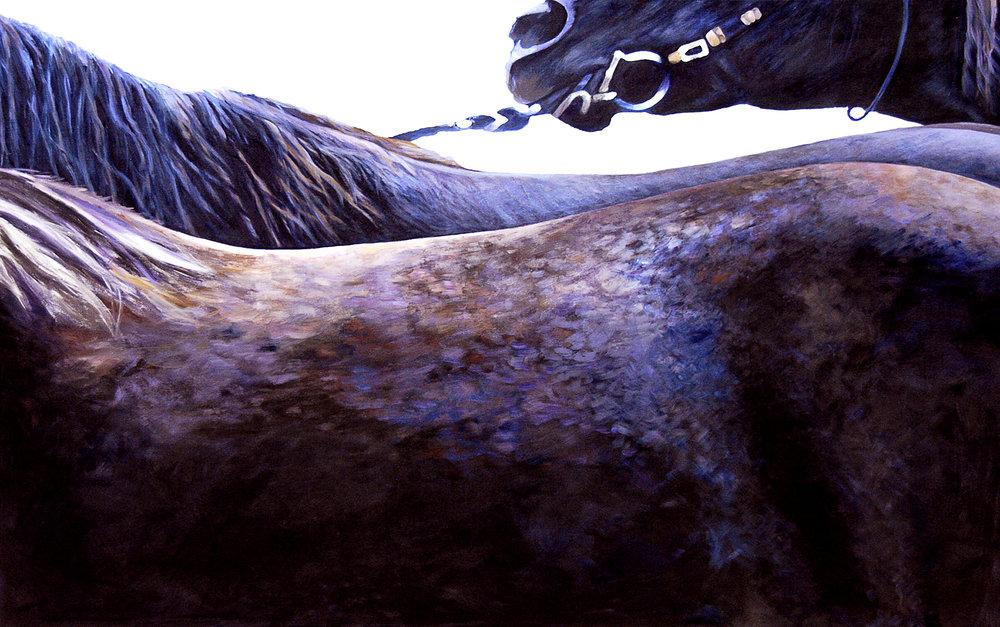 Drag I/Rocky Mountain Horse