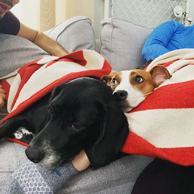 Snuggle up for warmth! Finn and his bestie Chance enjoyed their cold snowy weekend together indoors 🐶🐶
