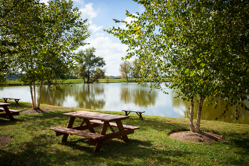 Picnic tables under birch trees surround the large pond.