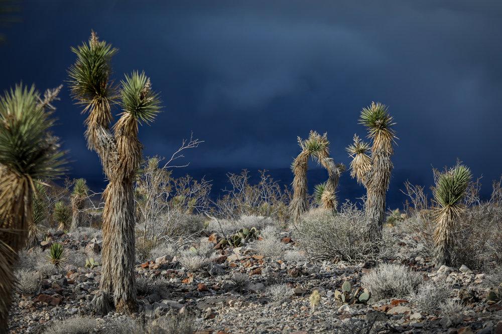 2018_03_18_Death Valley_0704.jpg