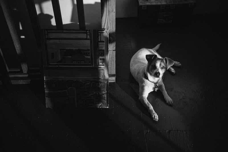 Studio pup Hank Sr. contemplates my markmaking. He is not impressed.Image courtesy of Shaun Roberts.