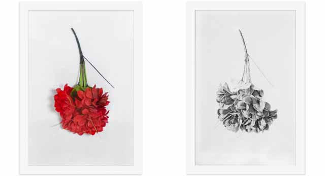 ound Object #1 (Bouquet), Charcoal & Graphite on Paper, 21x15 each