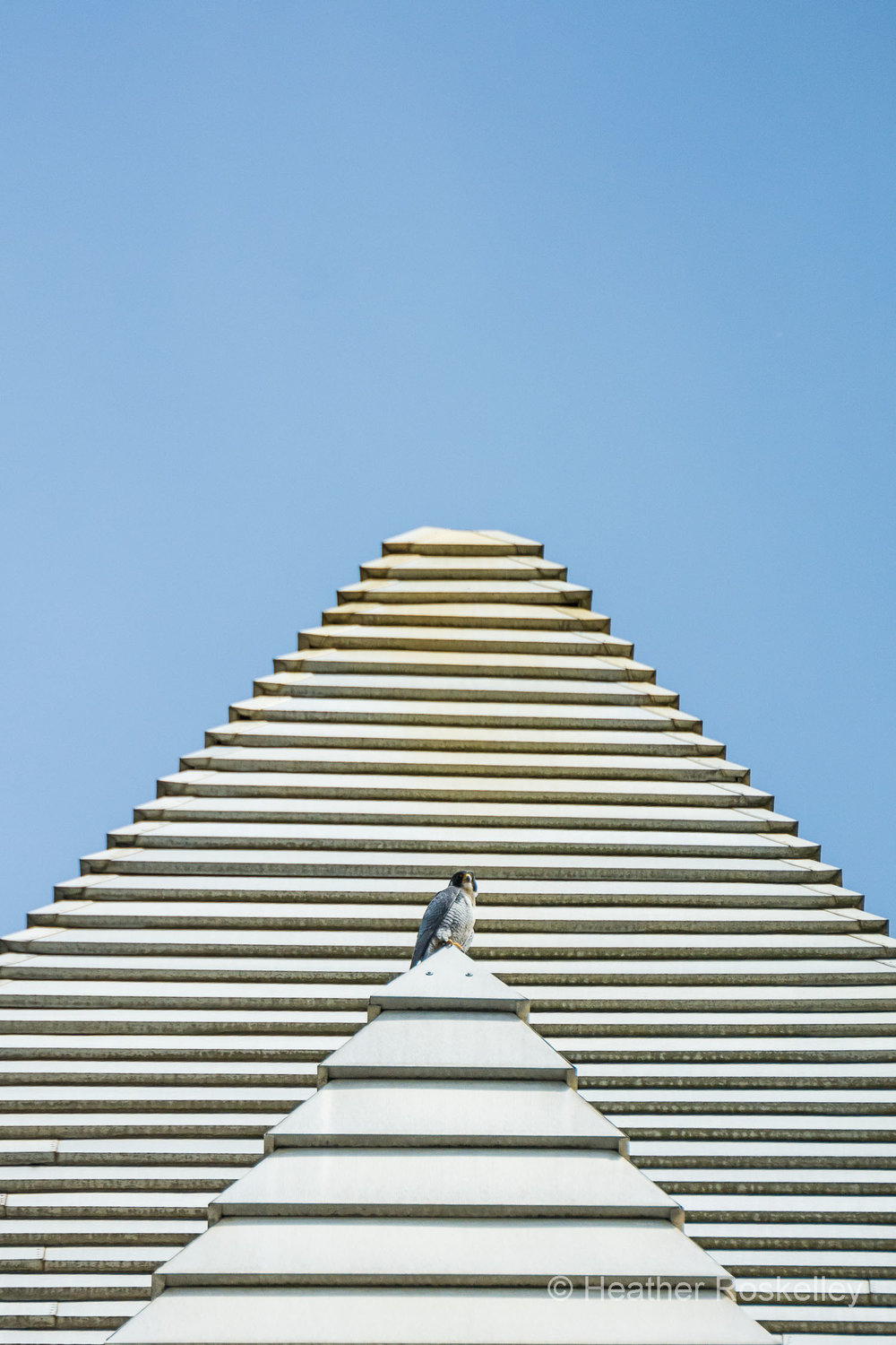 Murray sitting on a pyramid at the top of the 1119 Pacific Avenue building, which gives him a good view of his chicks.  This building was the tallest west of the Mississippi from 1911 until 1914. Perhaps Murray is envisioning himself to be the Egyptian falcon god, Horus.