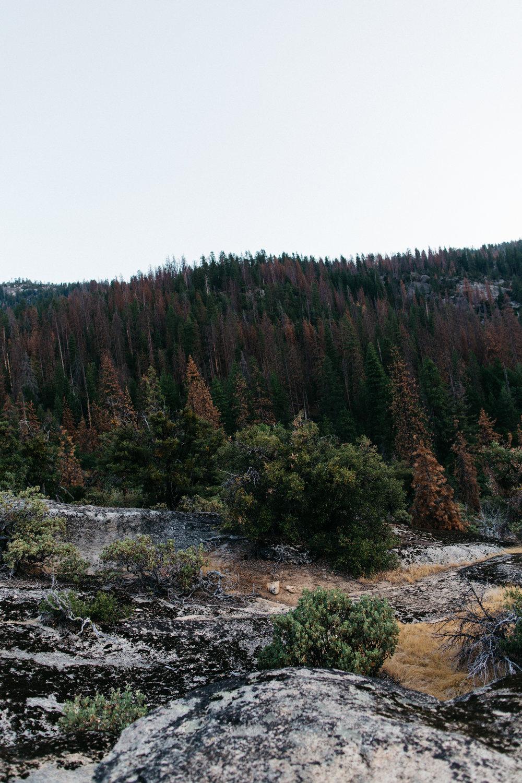 SamErica Studios - Yosemite Adventure-9.jpg