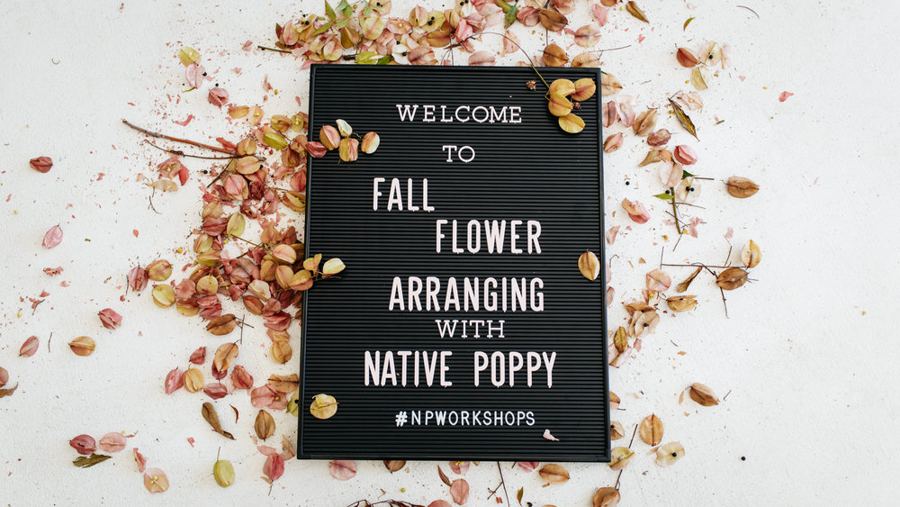 SamErica Studios Native Poppy
