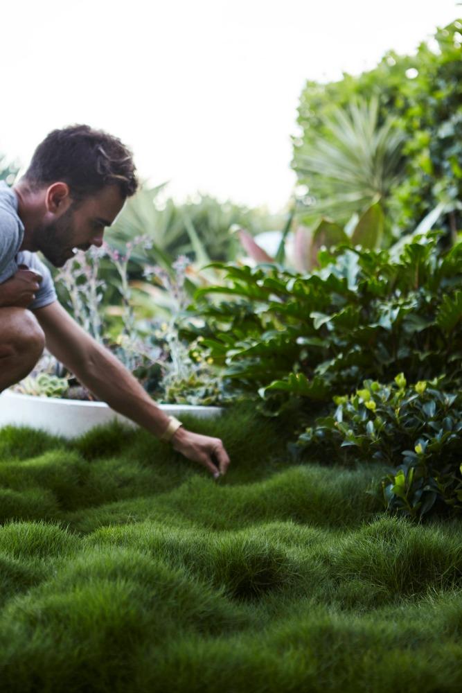 Korean Clumping Grass.....