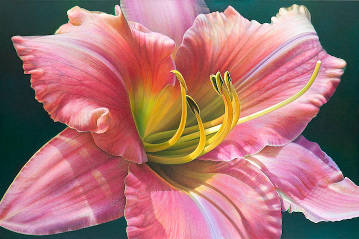 Daylilly Series #2