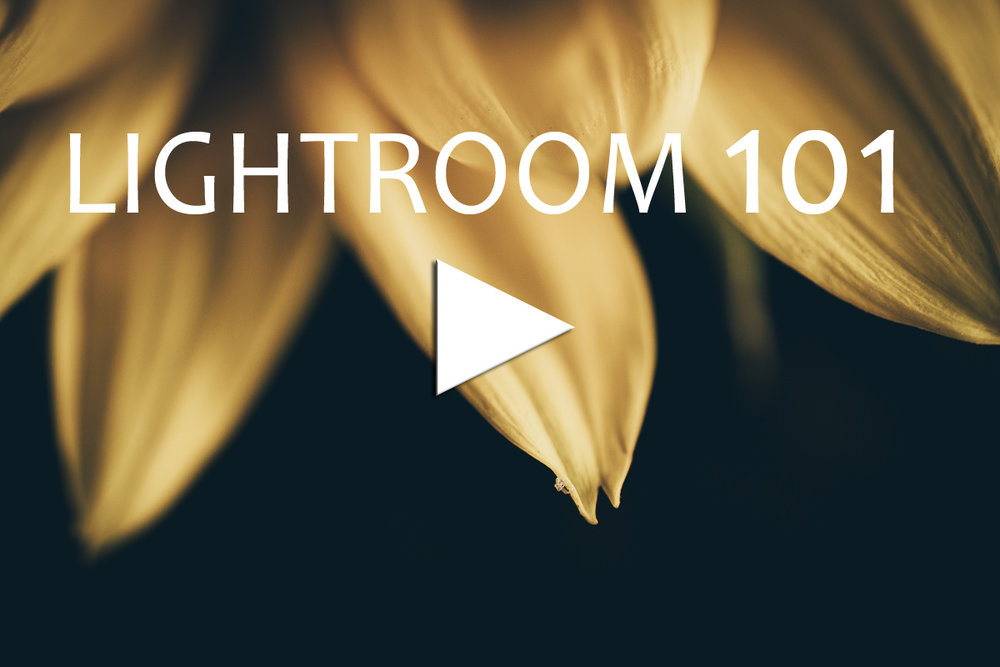Lightroom 101 - This is a FREE self help guide to using Adobe Lightroom, mostly created within My Creative Still Life Journey Photography class. My hope for this class is to give you a little guidance on some tips and tricks in Lightroom, for the Beginners and for more experienced users. Starting with a brief look around.