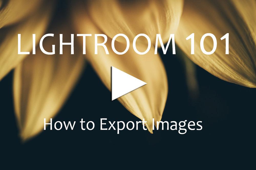 Export Images.jpg
