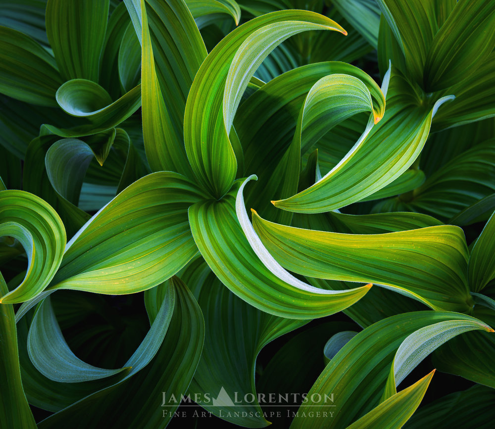 Folds of Green