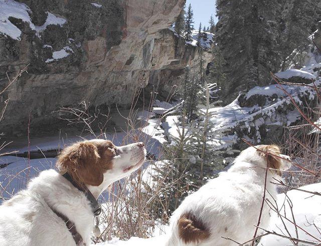 Two happy pups on a mountain adventure. #collaborateandexplore #pagosasprings
