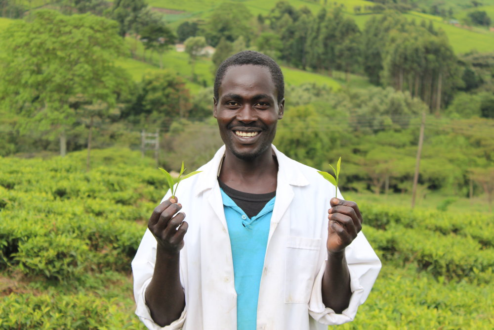 Nicholas loves his work and the steady income he receives. His three daughters are continuing with their education through his tea earnings.JPG