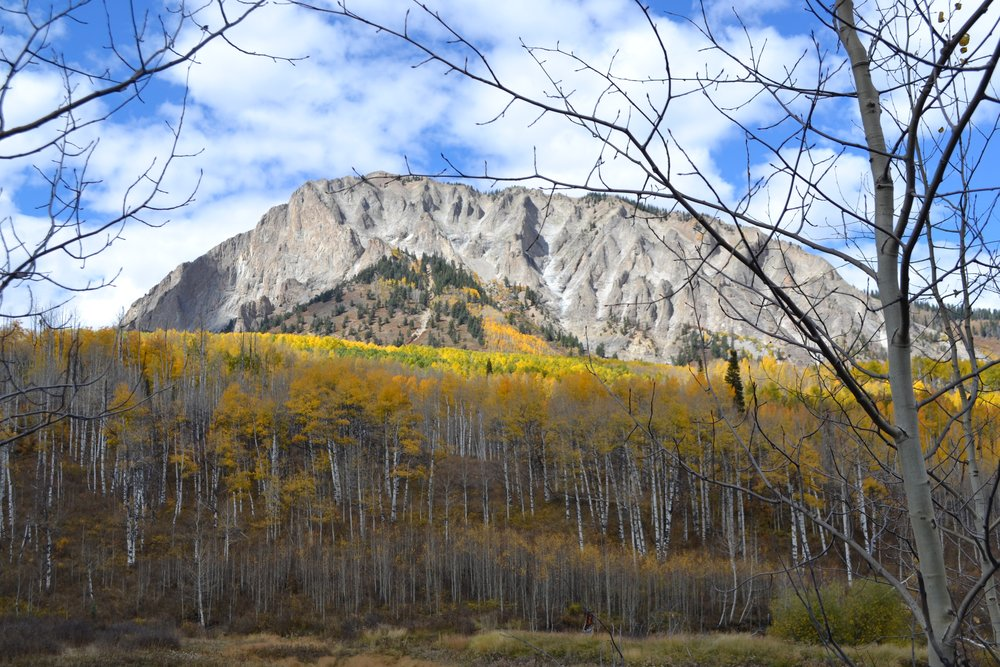 Marcellina and ASPENS