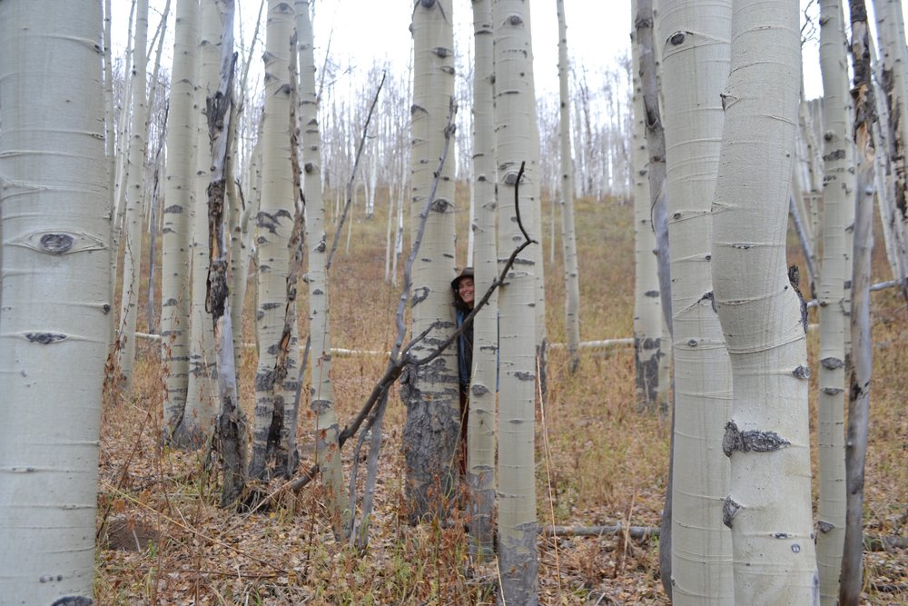 Real clutch aspens in Gothic.