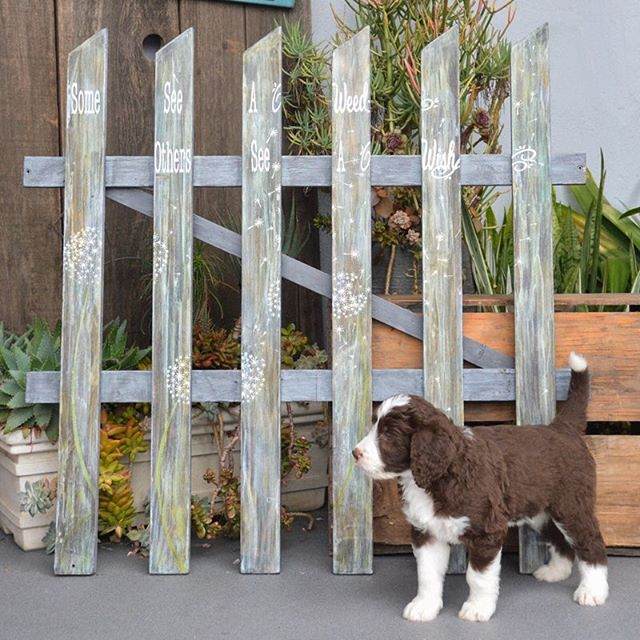 Some see a weed, others see a wish. COMING SOON - One of a kind retail items sold on our website. Look out for this gate and other amazing pieces! www.19thandwest.com