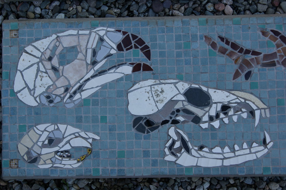 """Biodiversity"" mosaic at the Wyre Forest Visitor Centre, Bewdley, Worcestershire.  Skulls  of various animals and birds inhabiting the forest. Recycled china crockery and ceramic."