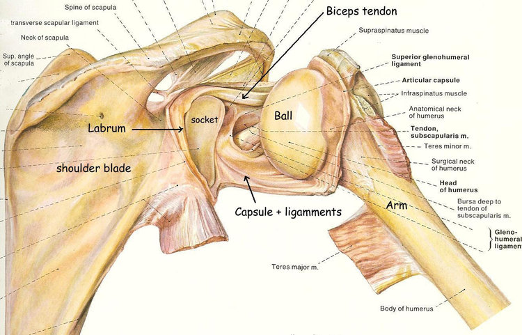 Shoulder instability — Park Clinic Orthopaedics