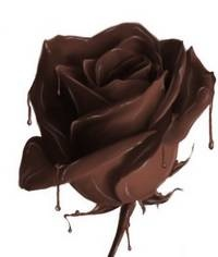 A chocolate rose – a match made in sensory heaven