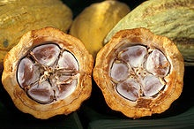 Cacao seeds within the fruit (picture: Wikipedia)