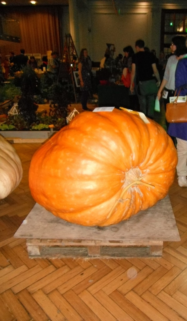 Cinderella's Coach - a pumpkin to be proud of! RHS Harvest Festival, London