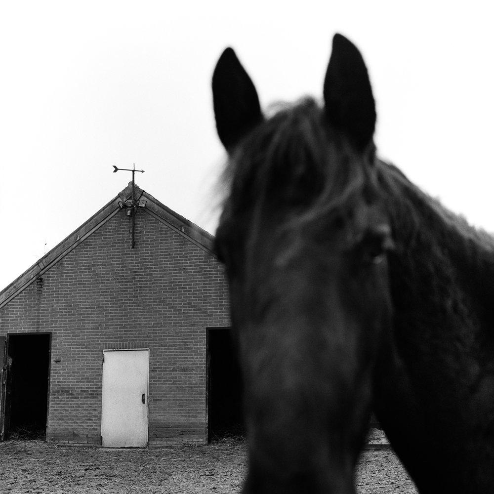 web-paard.jpg