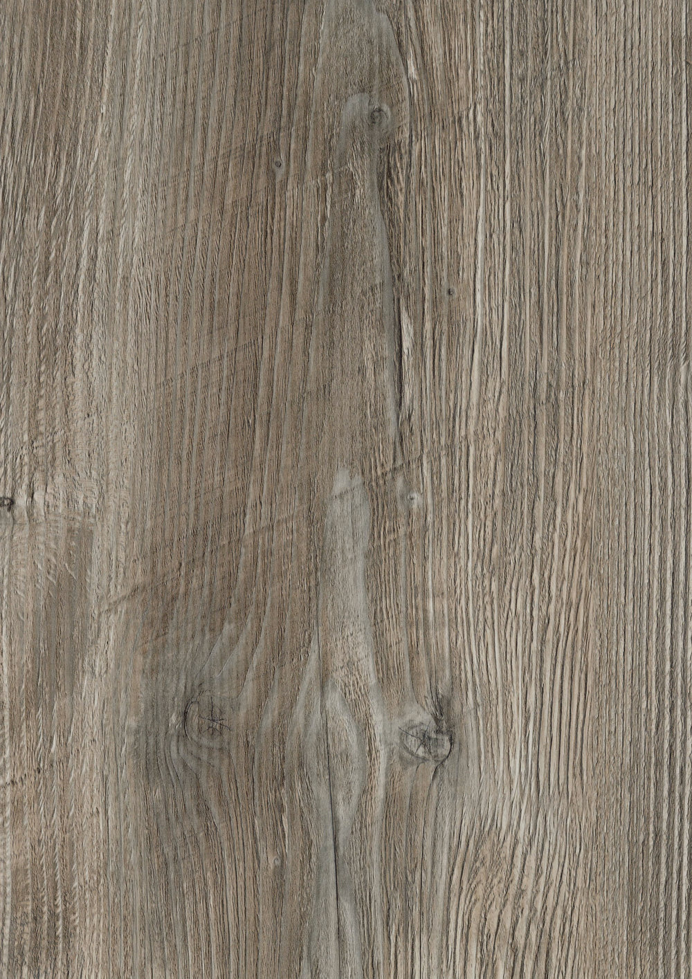 Ponderosa Pine R55004 RU