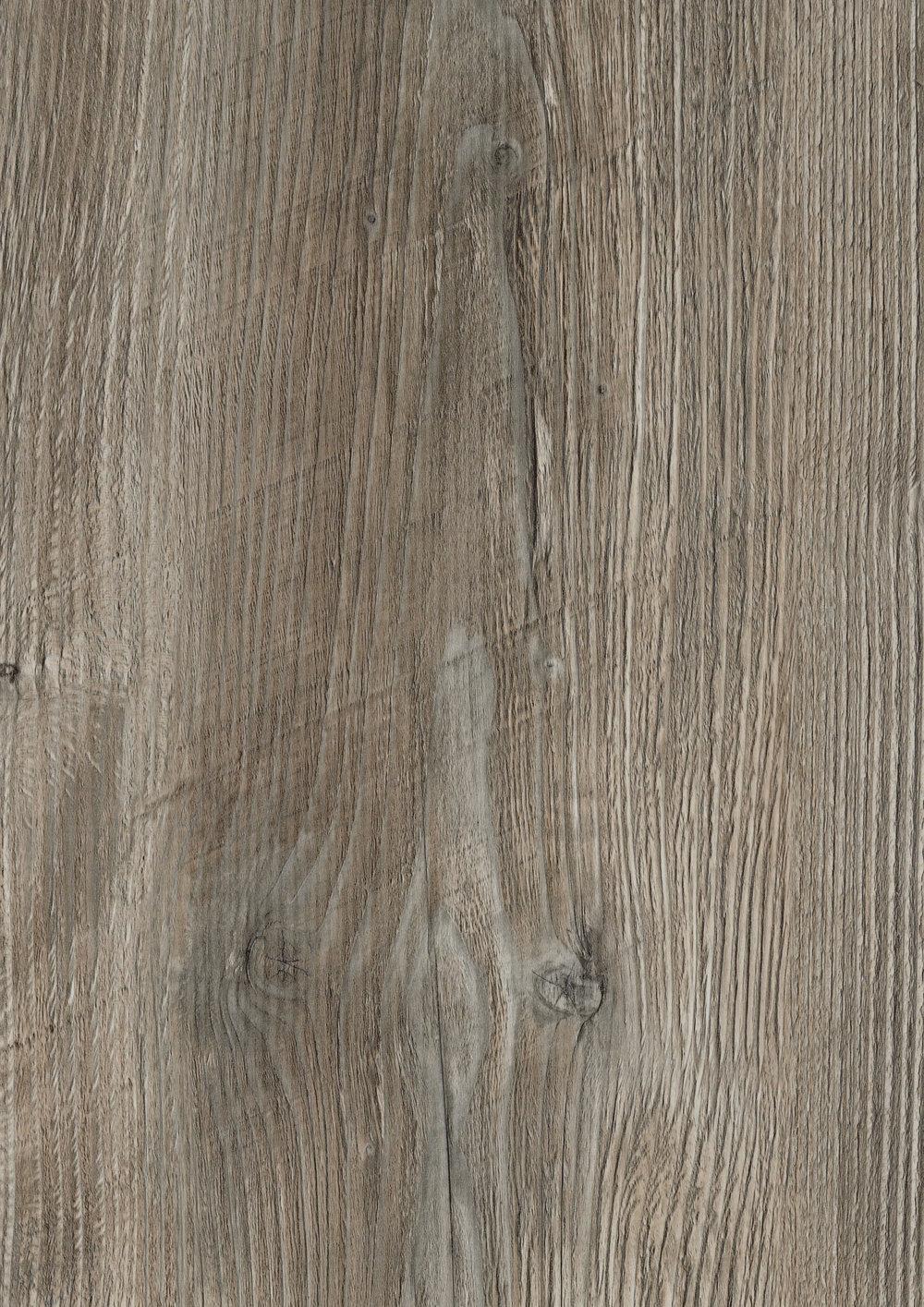 Ponderosa Pine 4531