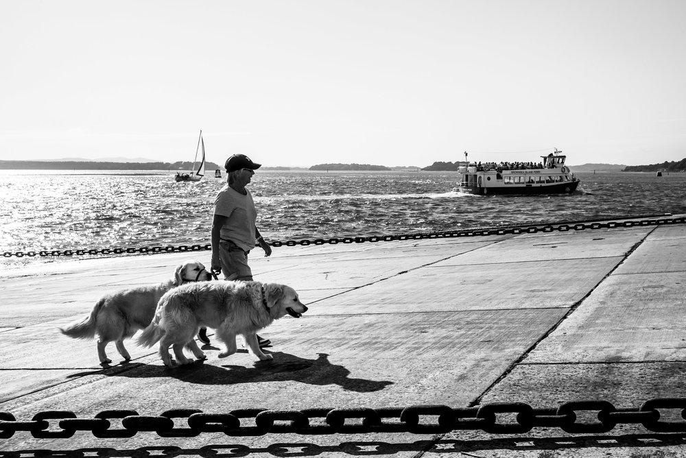 Sea Dogs.jpg
