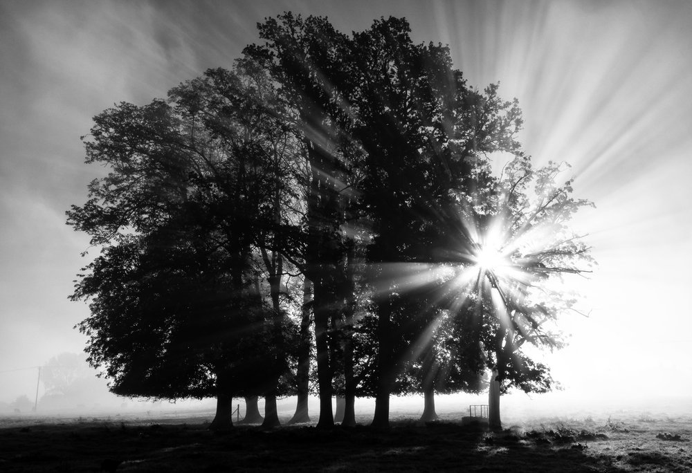 Morning Light.jpg