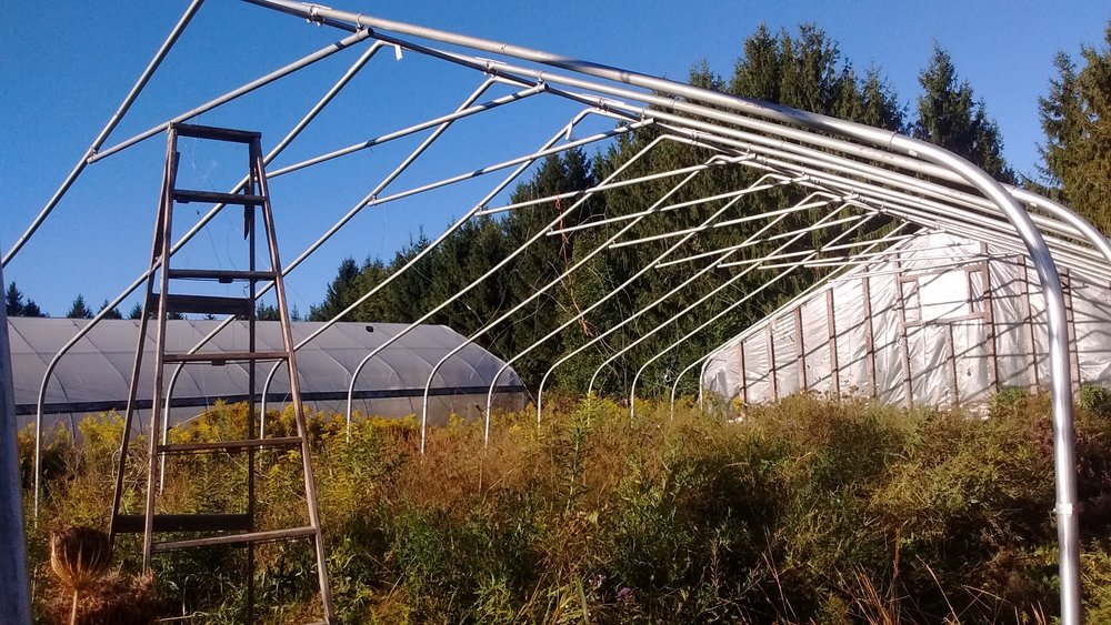 I purchased a used 30 foot x 48 foot gothic style high tunnel from a farm located about 1.5 hours away.  It took about 16 hours to take it down.  (September 15, 2016)