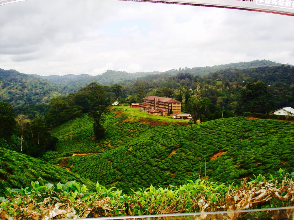 Tea Valley, Southern Tanzania