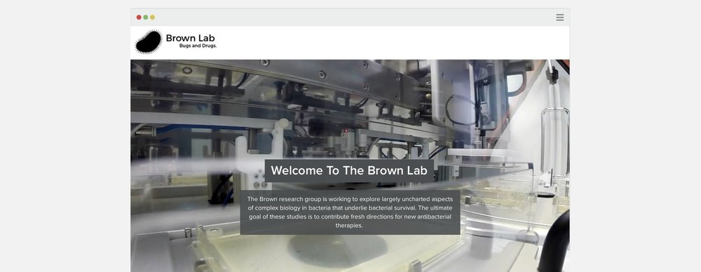 Brown Lab_new.jpg