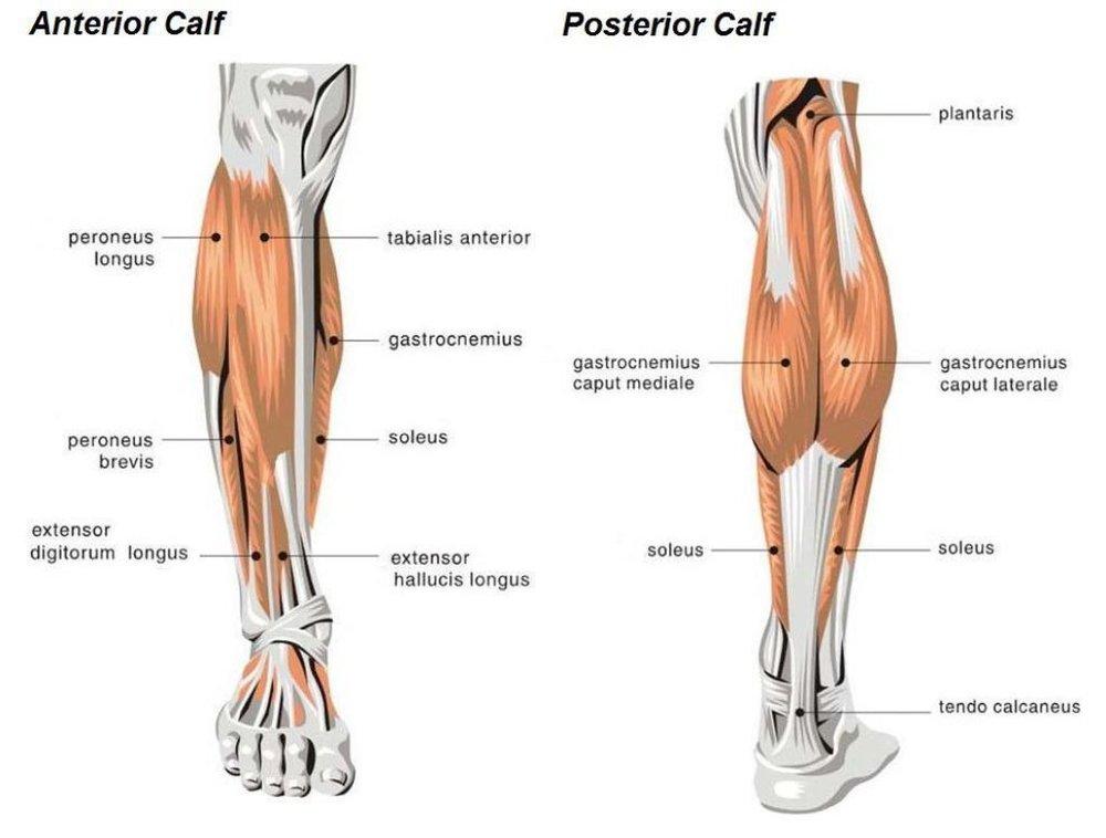 calves1.jpg