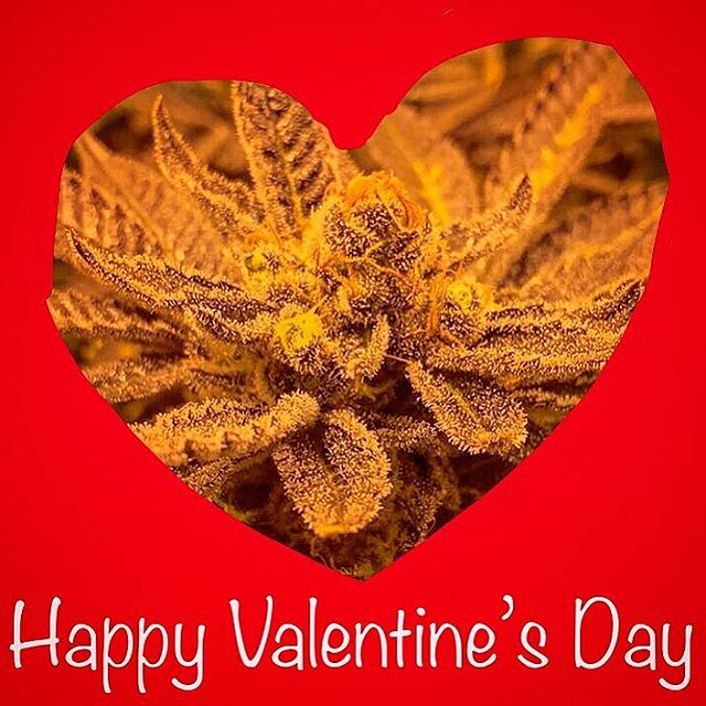 Happy Valentine's Day from #westmontcollective!  #valentinesday #vday #love #cannabis #cannabiscommunity #thc #cbd #ladispensary #westmontofficial