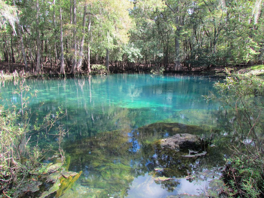 FWC photo by Karen Parker of MAnatee Springs