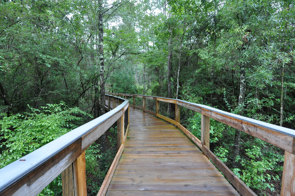 FWC photo by Rebekah Nelson at Falling waters state park