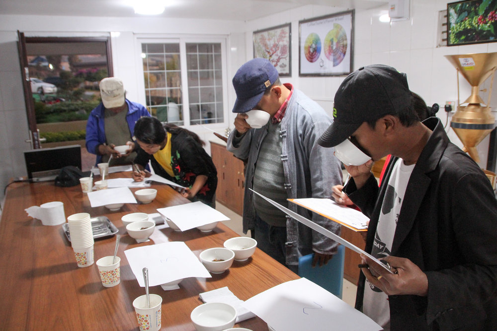 Mandalay Coffee Group team members cupping coffee to taste first                                               hand the effect of post-harvest practices.