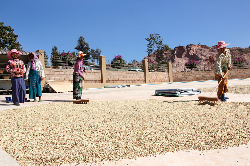 Coffee Drying on Patio