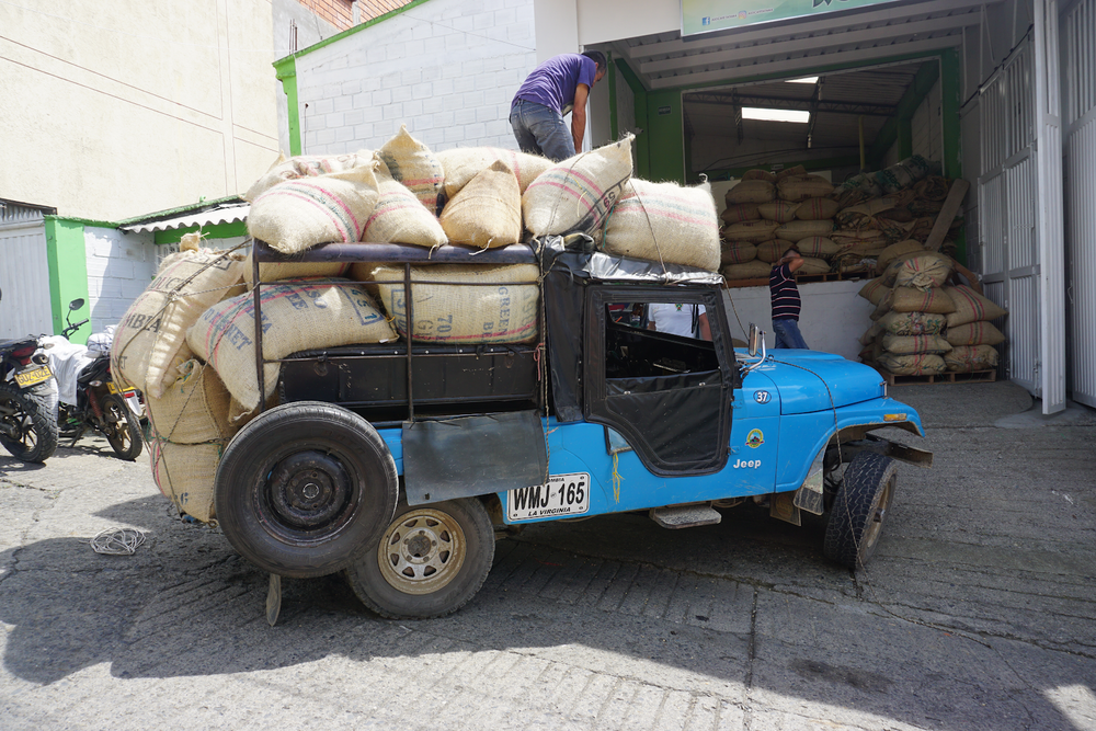Dried parchment coffee arriving from a farm in Risaraldo to Asocafe Tatama's warehouse in Santuario. The arriving coffee will go through green analysis and cupping in order to determine its quality and the coffee will either be rejected or accepted and purchased. Specialty-grade coffees will receive a premium over market value. Due to the limited output of most farms in the area and coffee prices at their lowest in years, many producers view quality improvement as their best chance of increasing income.