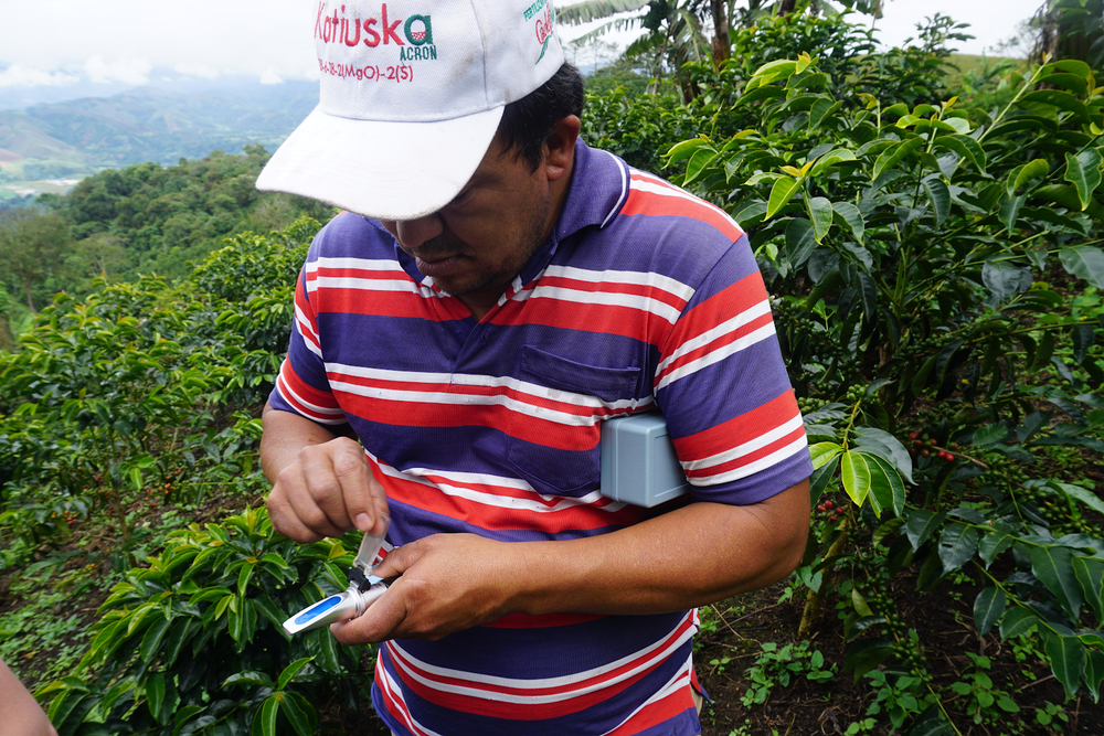 Marco Fidel Rodriguez of Finca El Balcon using a refractometer to take a brix reading from his coffee cherries. The reading represents the amount of sugar present in the fruit's juice and will help him to determine when his cherries are at optimal ripeness for picking.