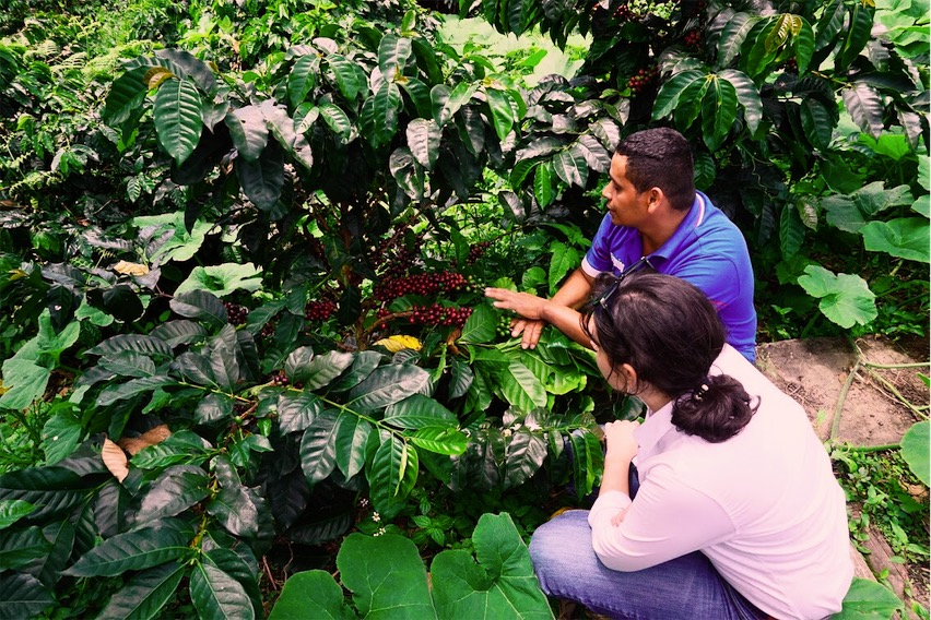 La Estrella-Inspecting Coffee Plants-edited.jpeg