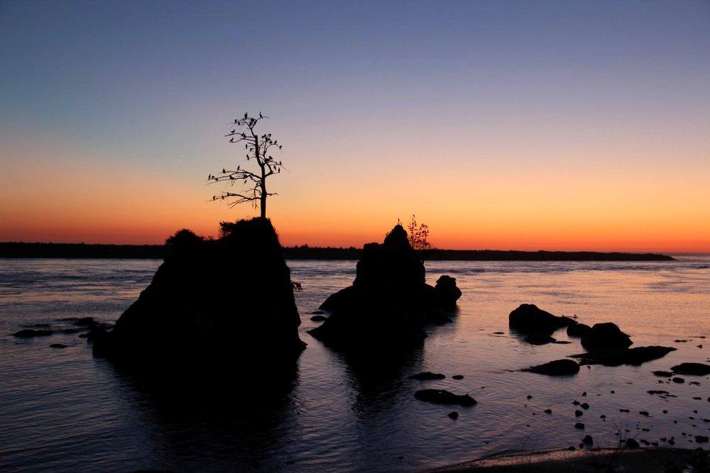 Bird perch sunset.jpg