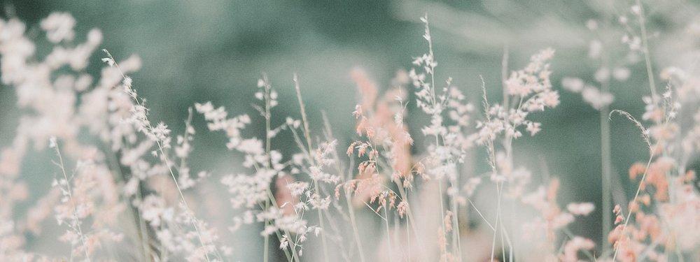 flora-flowers-grass-268261.jpg