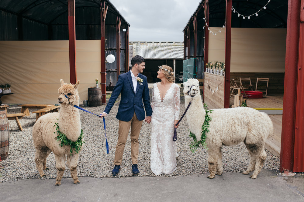Alpaca wedding Scotland