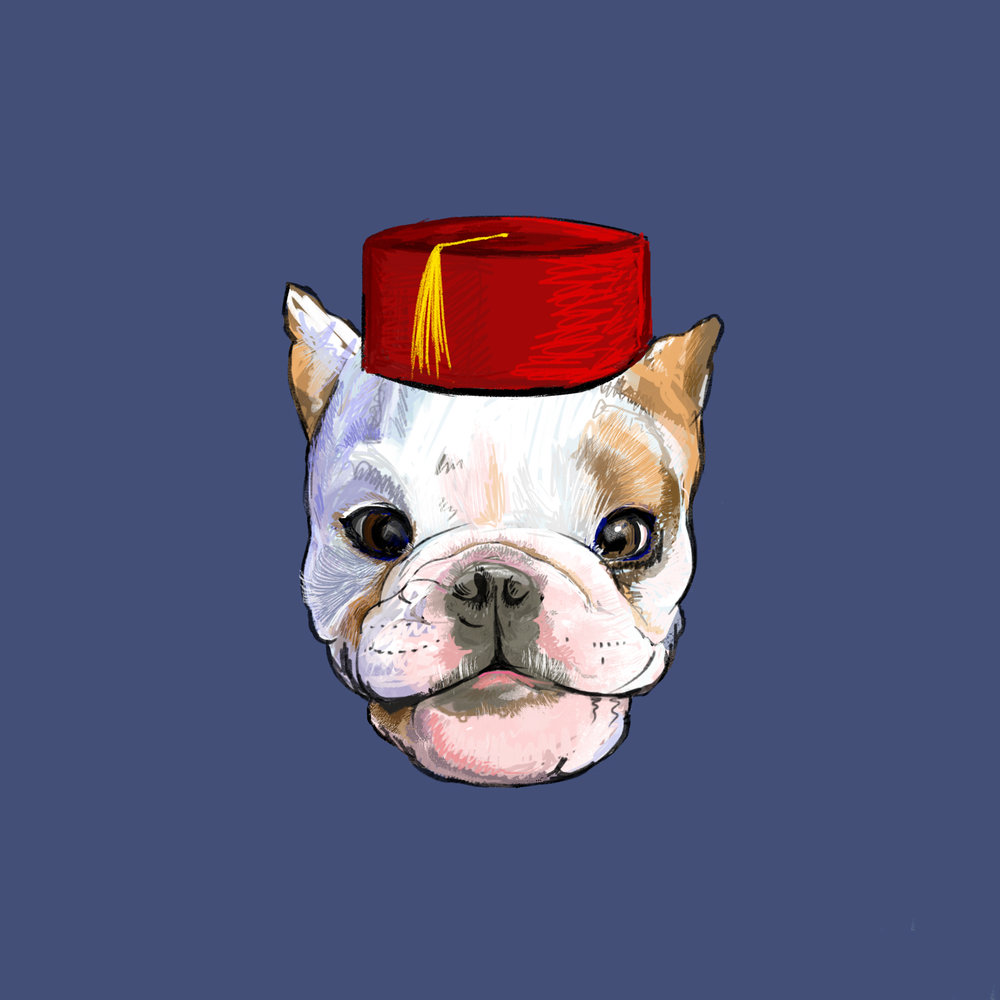 BullDog_Fez.jpg